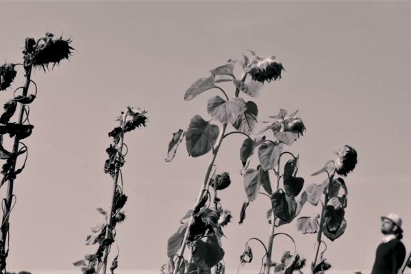 Foto von Sonnenblumen aus Konzertvideo von Filmproduktion